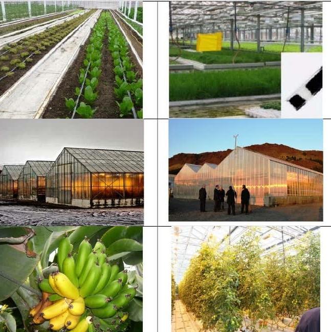 İzlanda'da jeotermal sera ve yetiştirilen ürünlerin örnekleri