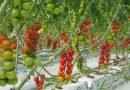 """Çiftçiler """"cam sera"""" eğitimleriyle jeotermal tarıma yönlendirilecek"""